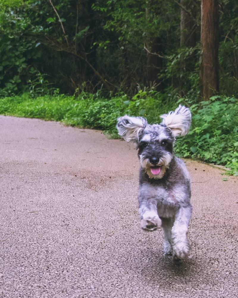 Dog-1森の中を走るRush