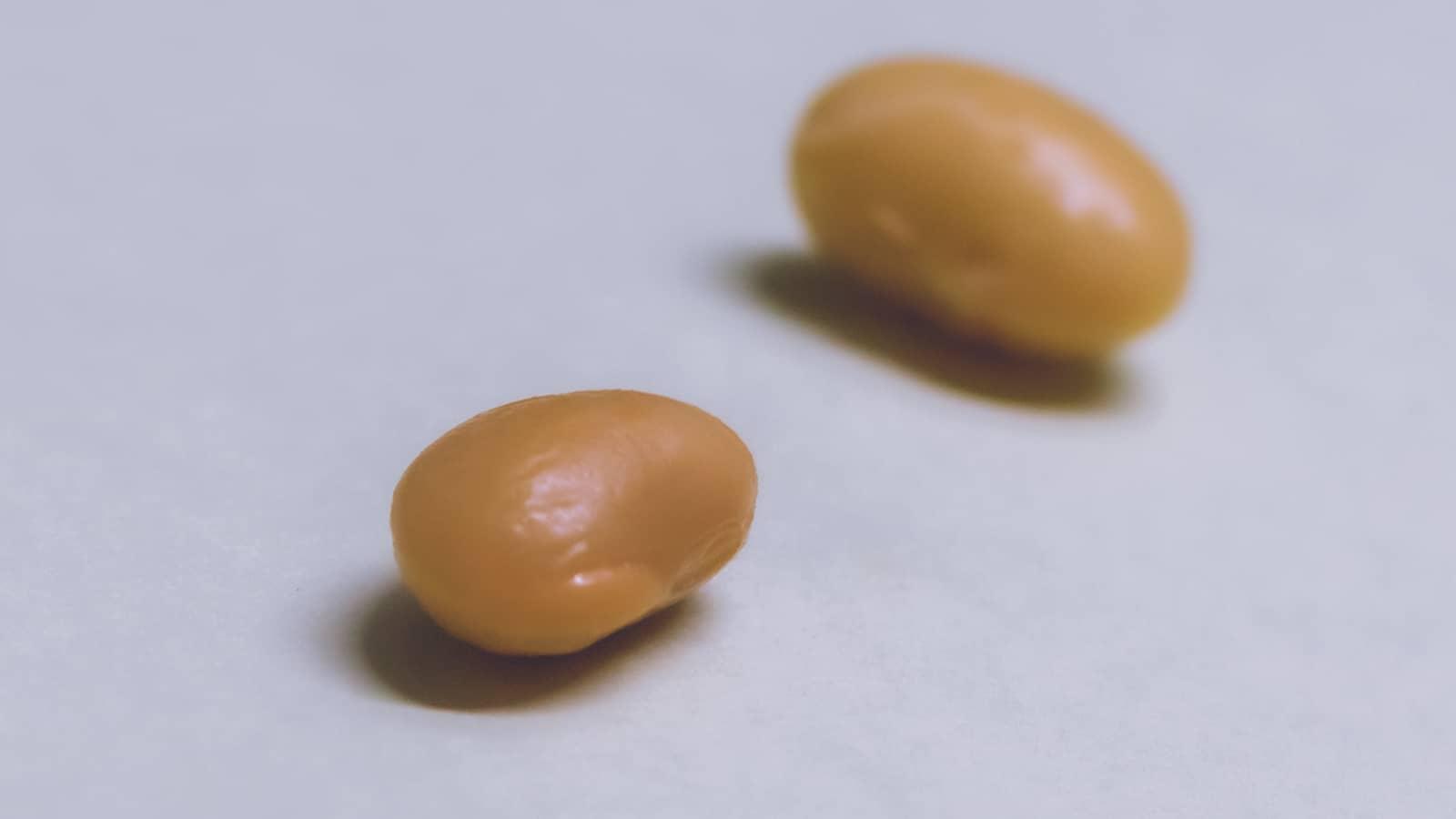 お味噌の原料大豆材料選び