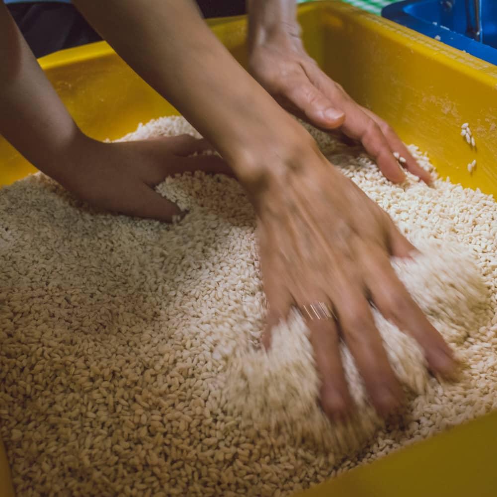 味噌造りの過程塩切り麹と大豆を混ぜる
